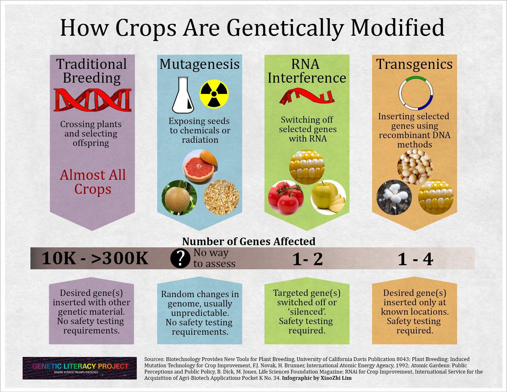 genetic modification Genetic engineering (ge) is the modification of an organism's genetic composition by artificial means, often involving the transfer of specific traits, or genes, from one organism into a.