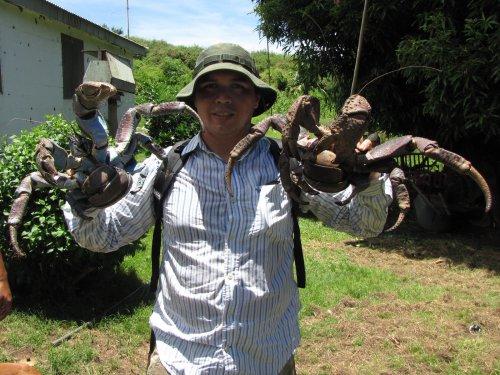 crab11